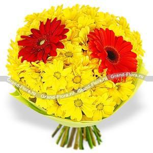 Цветы герберы купить пермь — 5